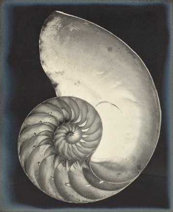 2014_NYR_02877_0126_001(edward_weston_nautilus_shell_1927124346)