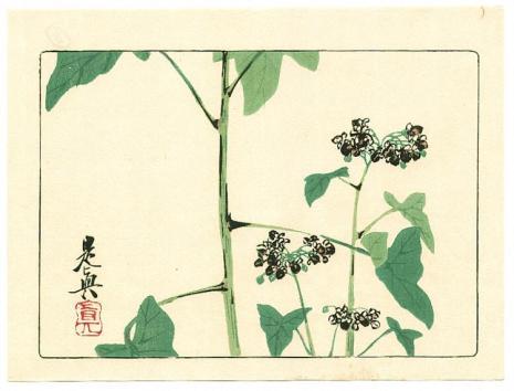 flowering-plant-hana-kurabe-1878.jpg!Large